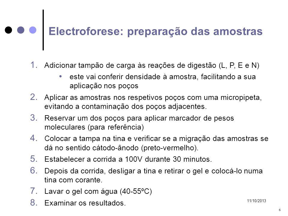 11/10/2013 6 Electroforese: preparação das amostras 1. Adicionar tampão de carga às reações de digestão (L, P, E e N) este vai conferir densidade à am