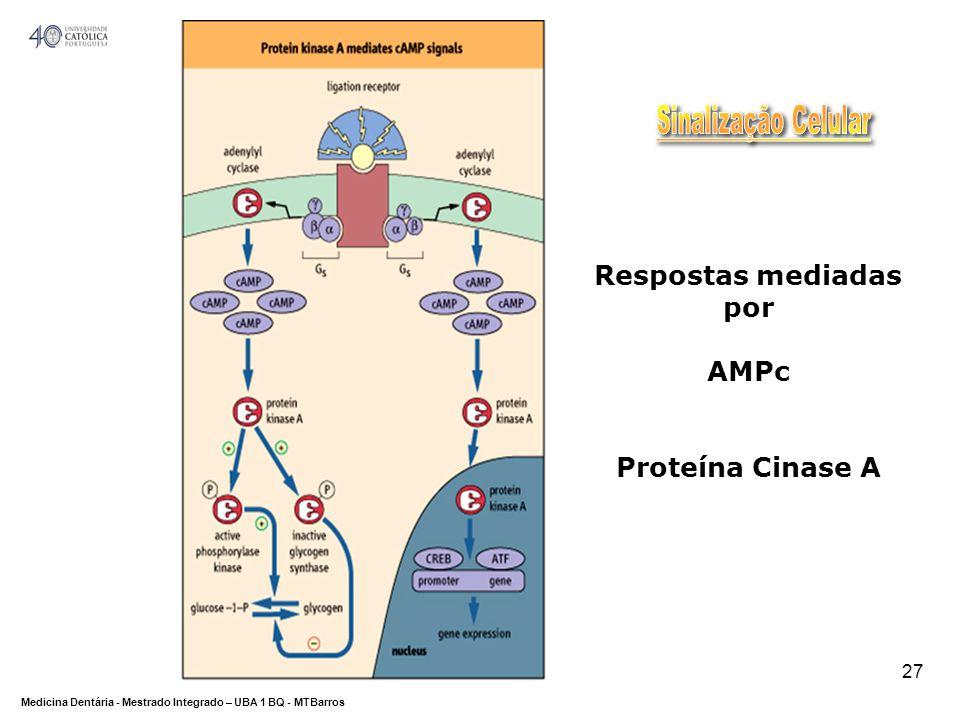 DEPARTAMENTO DE CIÊNCIAS DA SAÚDE Medicina Dentária - Mestrado Integrado – UBA 1 BQ - MTBarros 27 Respostas mediadas por AMPc Proteína Cinase A