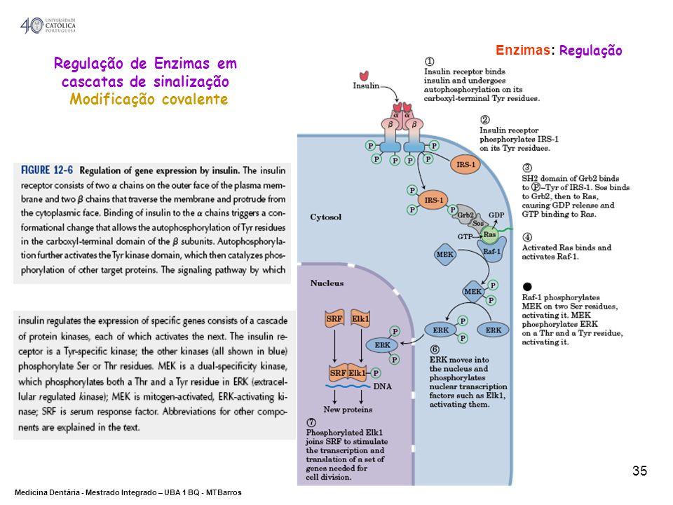 DEPARTAMENTO DE CIÊNCIAS DA SAÚDE Medicina Dentária - Mestrado Integrado – UBA 1 BQ - MTBarros 35 Enzimas: Regulação Regulação de Enzimas em cascatas