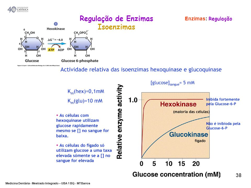 DEPARTAMENTO DE CIÊNCIAS DA SAÚDE Medicina Dentária - Mestrado Integrado – UBA 1 BQ - MTBarros 38 Enzimas: Regulação Regulação de Enzimas Isoenzimas