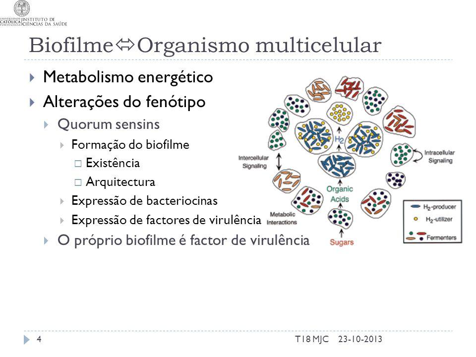 Biofilme Organismo multicelular Metabolismo energético Alterações do fenótipo Quorum sensins Formação do biofilme Existência Arquitectura Expressão de