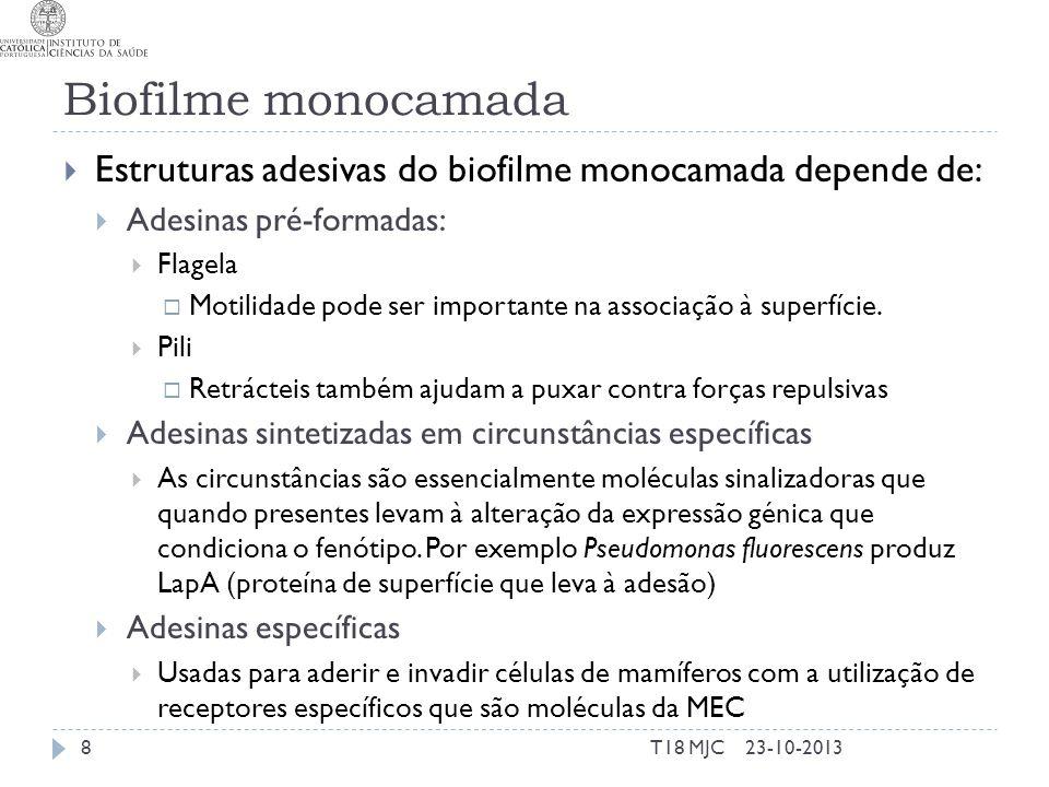 Biofilme monocamada Estruturas adesivas do biofilme monocamada depende de: Adesinas pré-formadas: Flagela Motilidade pode ser importante na associação