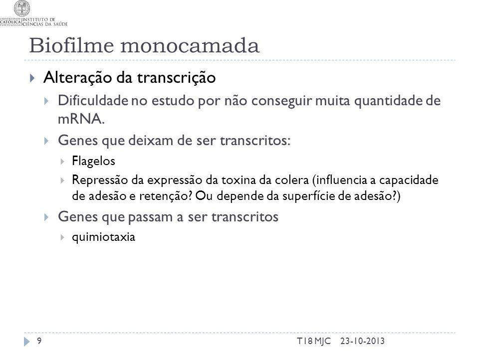 Biofilme monocamada Alteração da transcrição Dificuldade no estudo por não conseguir muita quantidade de mRNA. Genes que deixam de ser transcritos: Fl