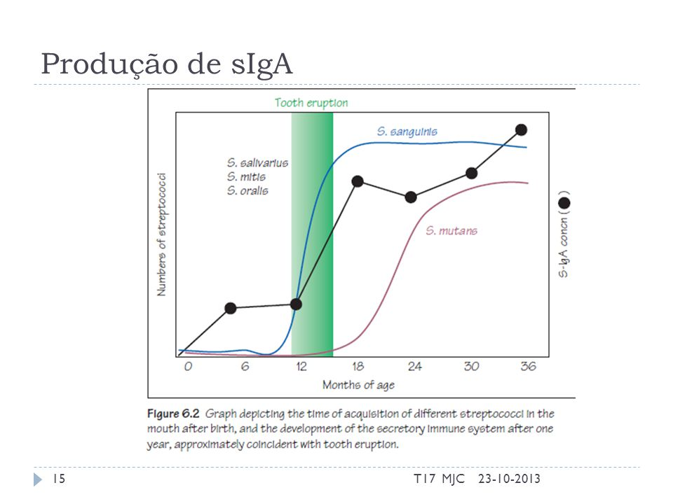 Produção de sIgA 23-10-2013T17 MJC15
