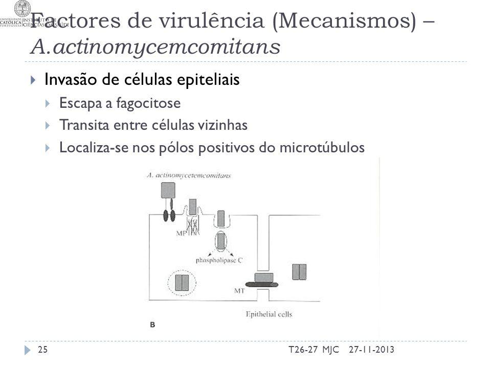 Factores de virulência (Mecanismos) – A.actinomycemcomitans Invasão de células epiteliais Escapa a fagocitose Transita entre células vizinhas Localiza
