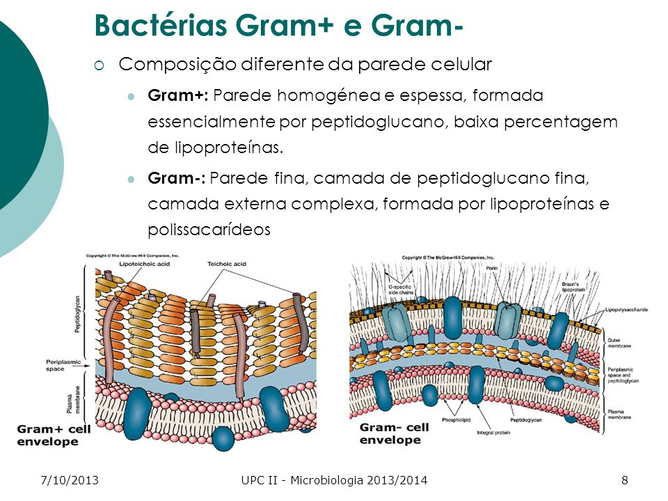 7/10/2013UPC II - Microbiologia 2013/20148 Bactérias Gram+ e Gram- Composição diferente da parede celular Gram+: Parede homogénea e espessa, formada essencialmente por peptidoglucano, baixa percentagem de lipoproteínas.