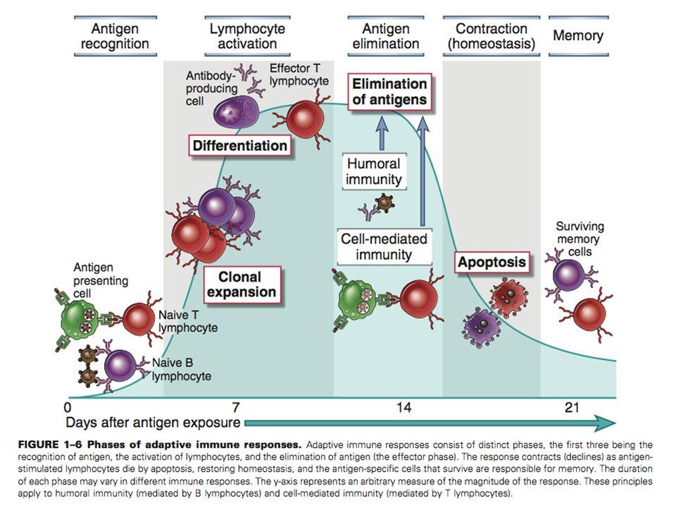 DEPARTAMENTO DE CIÊNCIAS DA SAÚDE - UCP Imunobiologia - MTBarros 11