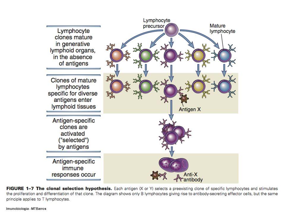DEPARTAMENTO DE CIÊNCIAS DA SAÚDE - UCP Imunobiologia - MTBarros 12