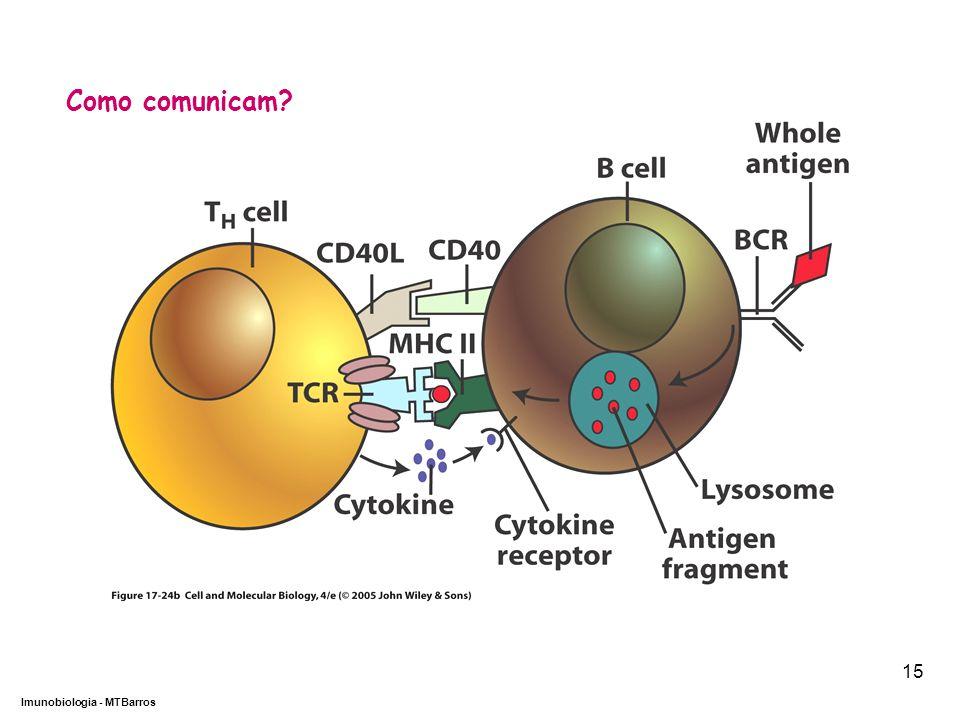 DEPARTAMENTO DE CIÊNCIAS DA SAÚDE - UCP Imunobiologia - MTBarros 15 Como comunicam?