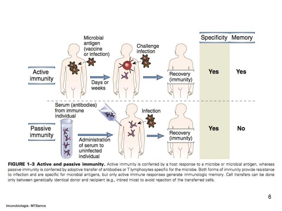 DEPARTAMENTO DE CIÊNCIAS DA SAÚDE - UCP Imunobiologia - MTBarros 6