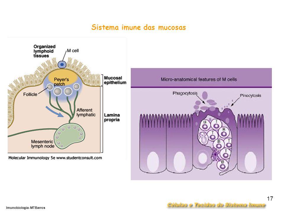 DEPARTAMENTO DE CIÊNCIAS DA SAÚDE - UCP Imunobiologia- MTBarros 17 Sistema imune das mucosas