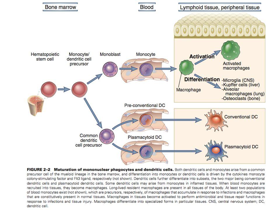 DEPARTAMENTO DE CIÊNCIAS DA SAÚDE - UCP Imunobiologia- MTBarros 2
