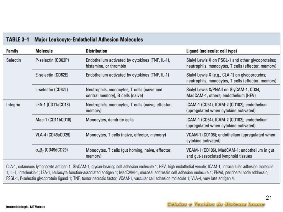 DEPARTAMENTO DE CIÊNCIAS DA SAÚDE - UCP Imunobiologia- MTBarros 21