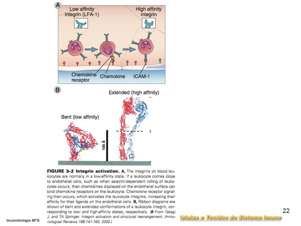 DEPARTAMENTO DE CIÊNCIAS DA SAÚDE - UCP Imunobiologia- MTBarros 22
