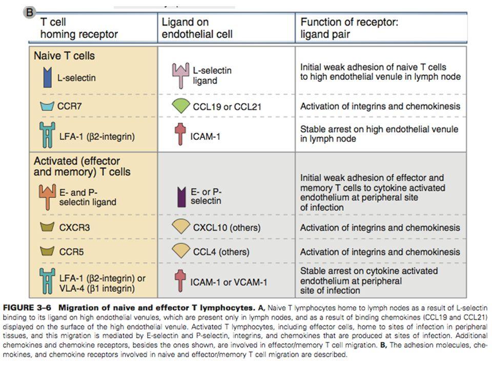 DEPARTAMENTO DE CIÊNCIAS DA SAÚDE - UCP Imunobiologia- MTBarros 26