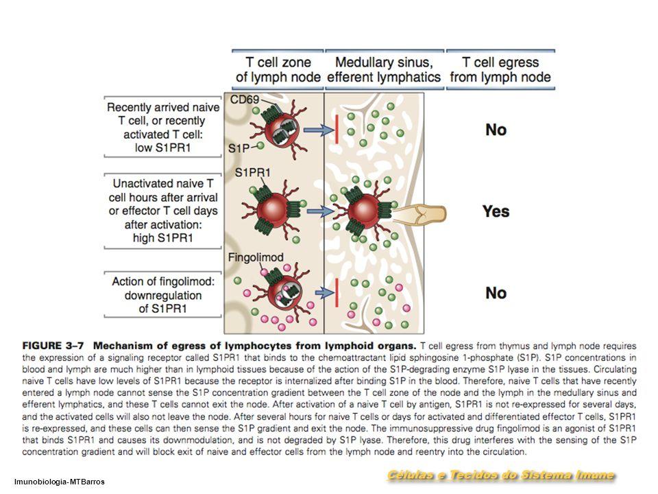 DEPARTAMENTO DE CIÊNCIAS DA SAÚDE - UCP Imunobiologia- MTBarros 27