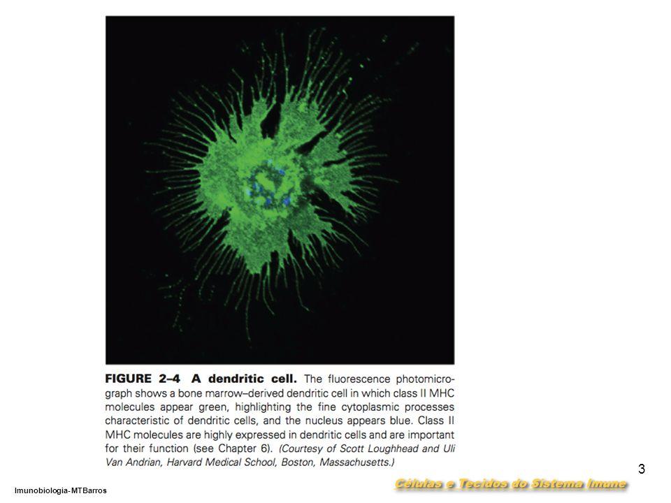 DEPARTAMENTO DE CIÊNCIAS DA SAÚDE - UCP Imunobiologia- MTBarros 3
