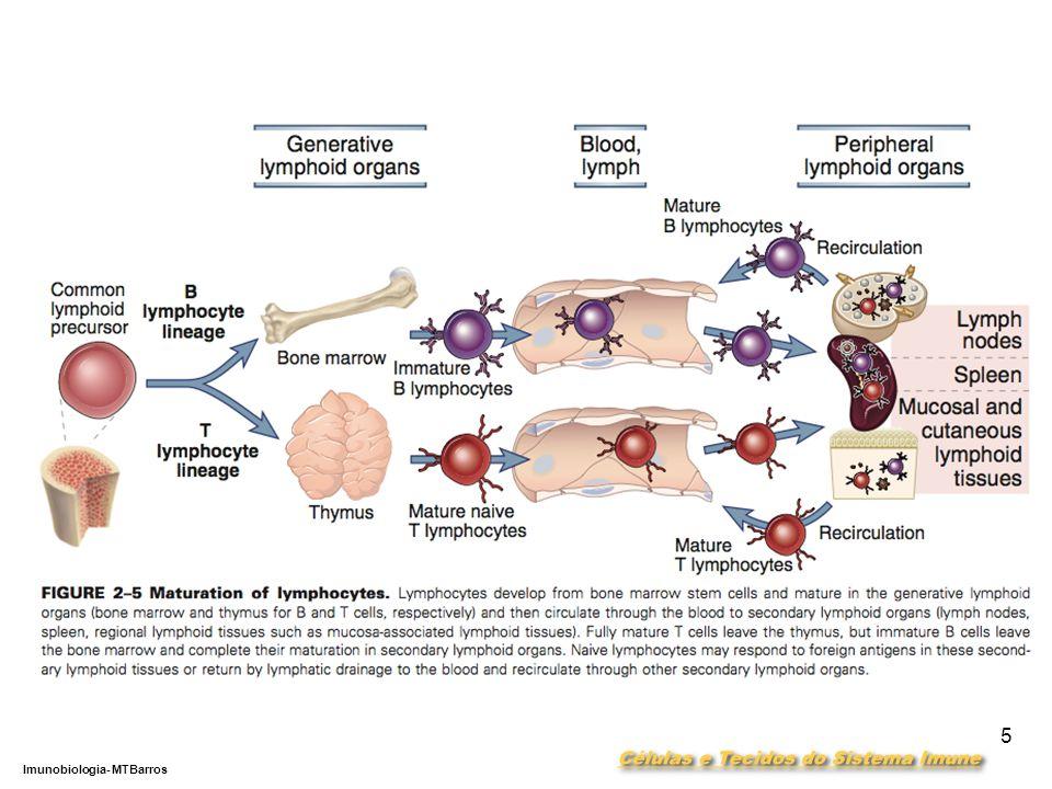 DEPARTAMENTO DE CIÊNCIAS DA SAÚDE - UCP Imunobiologia- MTBarros 5