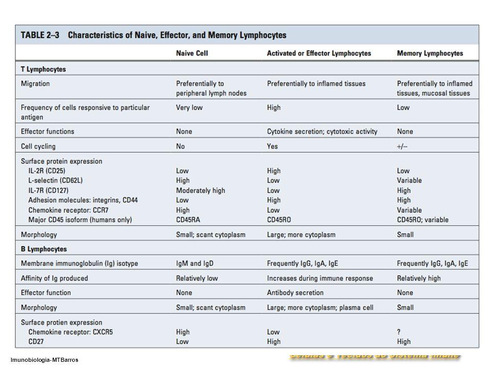 DEPARTAMENTO DE CIÊNCIAS DA SAÚDE - UCP Imunobiologia- MTBarros 7