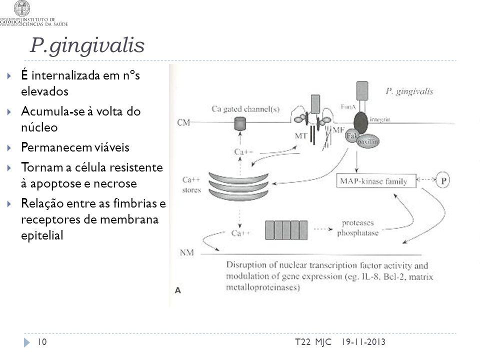 P.gingivalis É internalizada em nºs elevados Acumula-se à volta do núcleo Permanecem viáveis Tornam a célula resistente à apoptose e necrose Relação entre as fimbrias e receptores de membrana epitelial 19-11-2013T22 MJC10