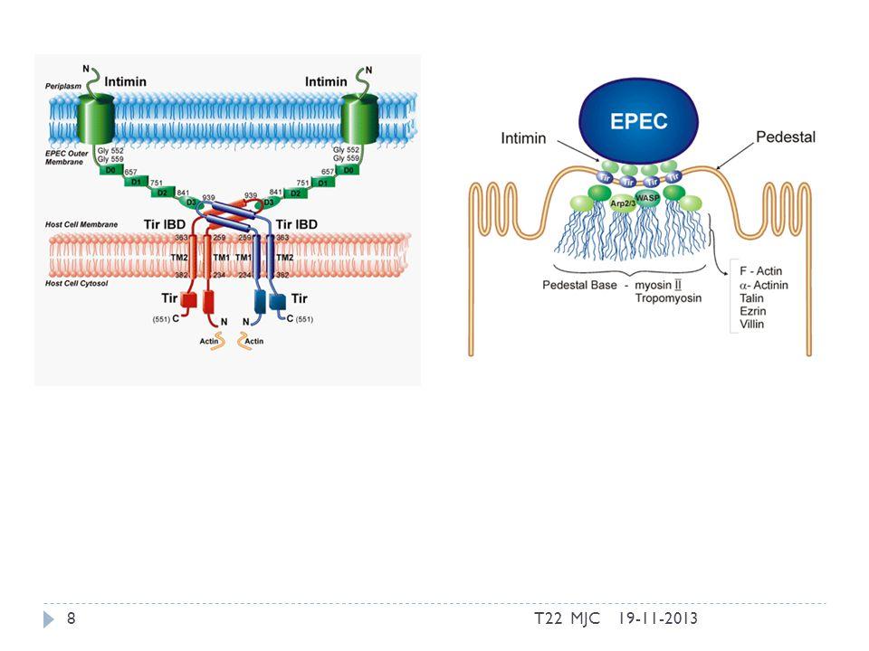 MO Orais que interferem com Células Epiteliais de forma específica P.