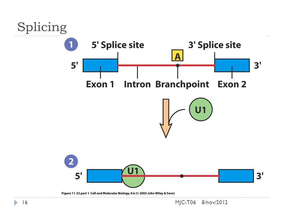 Splicing 8/nov/201216MJC-T06