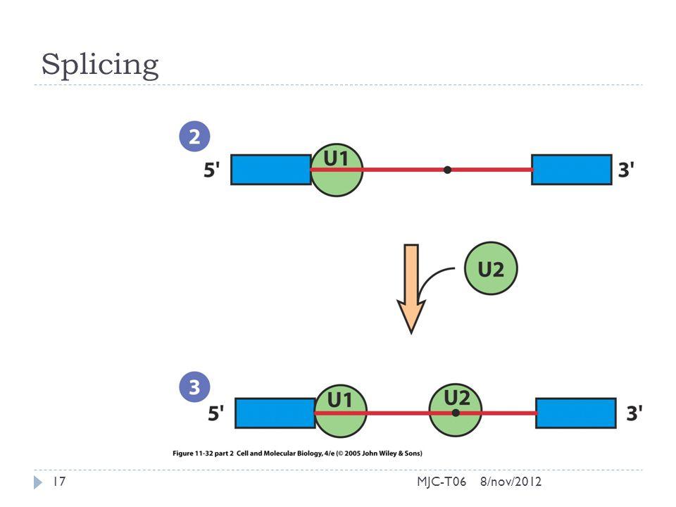Splicing 8/nov/201217MJC-T06