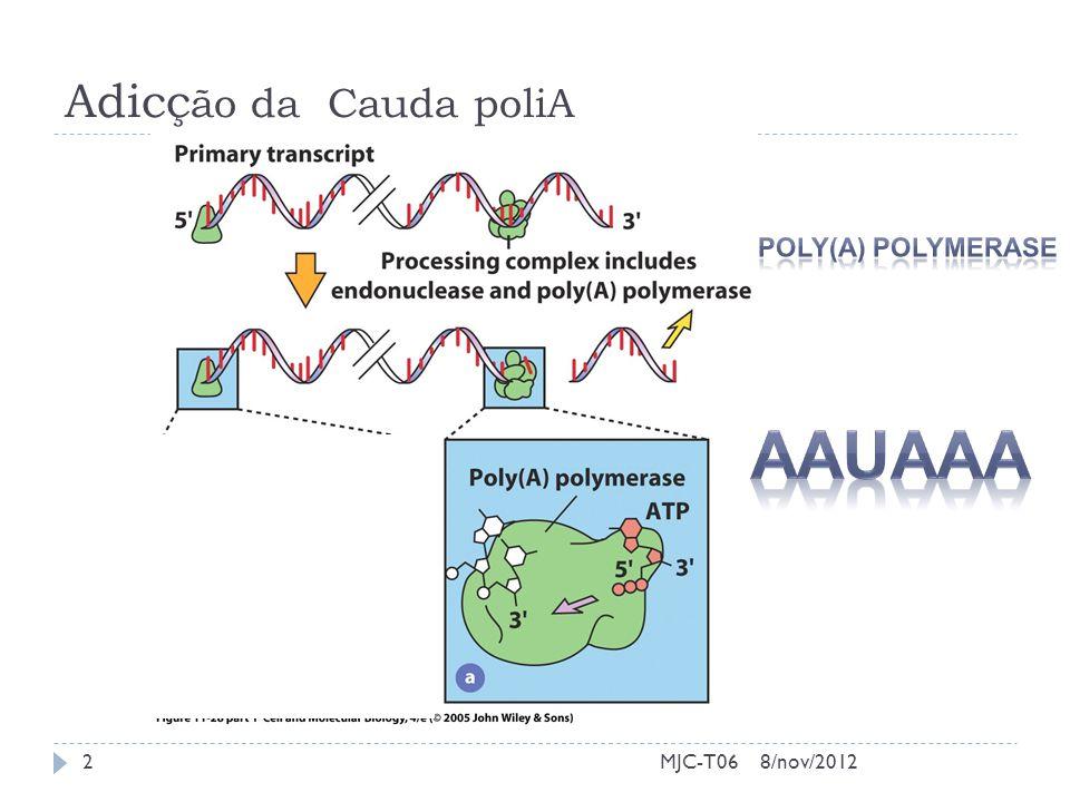 Adicç ão da Cauda poliA 8/nov/20122MJC-T06