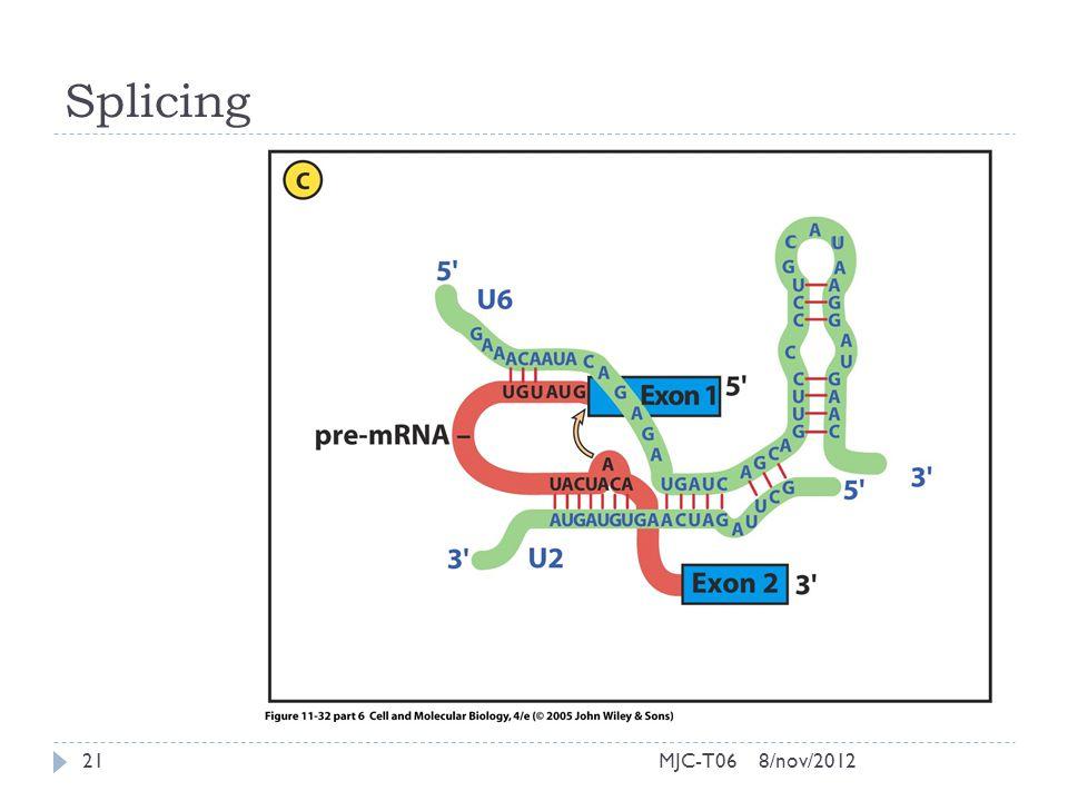 Splicing 8/nov/201221MJC-T06