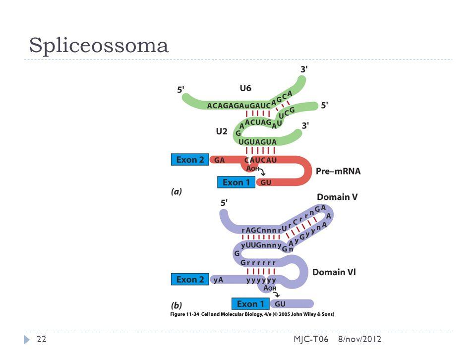 Spliceossoma 8/nov/201222MJC-T06