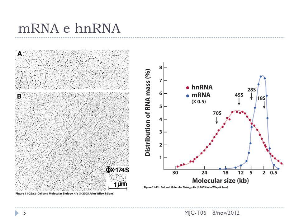 mRNA e hnRNA 8/nov/20125MJC-T06