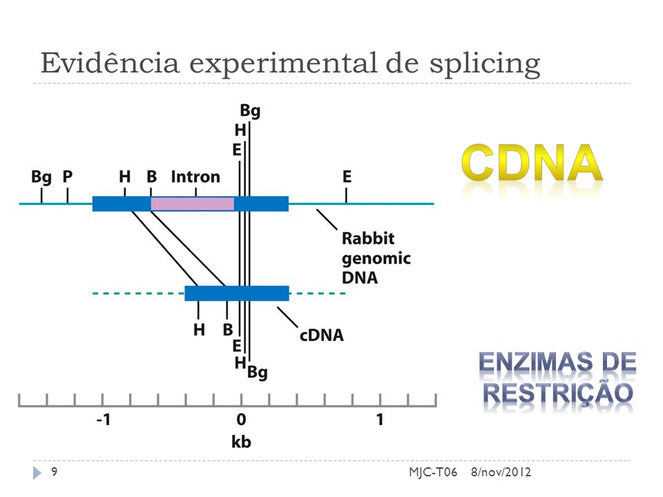 Evidência experimental de splicing 8/nov/2012MJC-T069