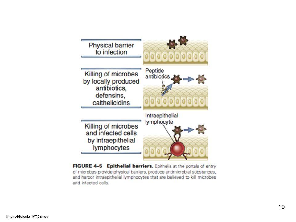 DEPARTAMENTO DE CIÊNCIAS DA SAÚDE - UCP Imunobiologia - MTBarros 10