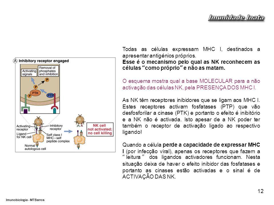 DEPARTAMENTO DE CIÊNCIAS DA SAÚDE - UCP Imunobiologia - MTBarros 12 Todas as células expressam MHC I, destinados a apresentar antigénios próprios.
