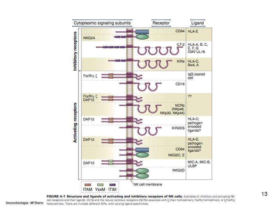 DEPARTAMENTO DE CIÊNCIAS DA SAÚDE - UCP Imunobiologia - MTBarros 13
