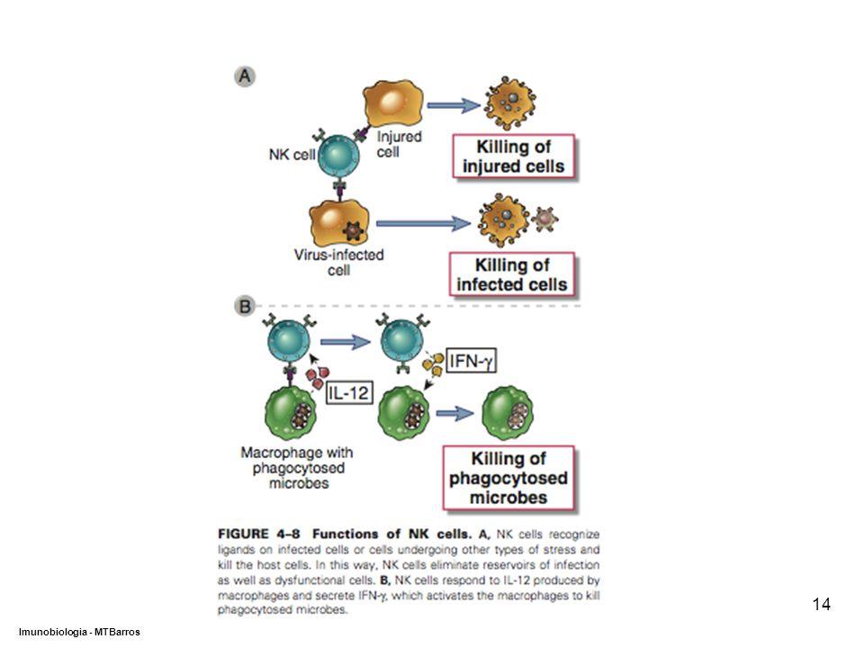 DEPARTAMENTO DE CIÊNCIAS DA SAÚDE - UCP Imunobiologia - MTBarros 14
