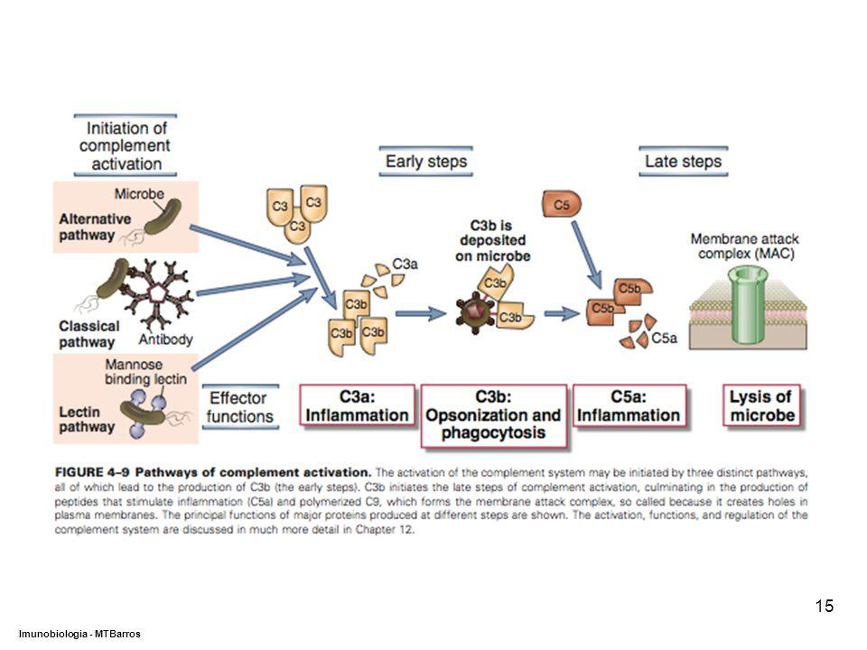 DEPARTAMENTO DE CIÊNCIAS DA SAÚDE - UCP Imunobiologia - MTBarros 15