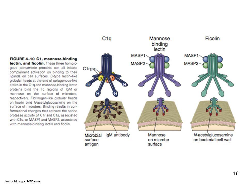 DEPARTAMENTO DE CIÊNCIAS DA SAÚDE - UCP Imunobiologia - MTBarros 16