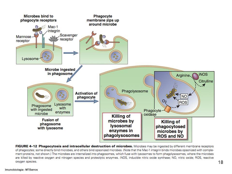 DEPARTAMENTO DE CIÊNCIAS DA SAÚDE - UCP Imunobiologia - MTBarros 18