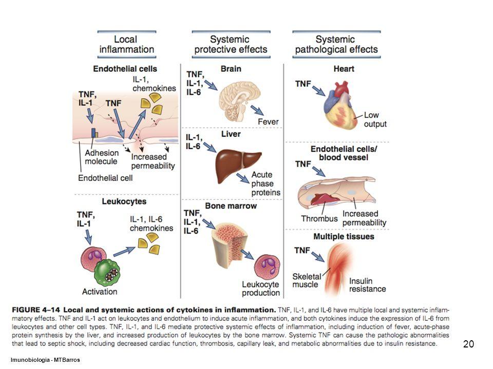 DEPARTAMENTO DE CIÊNCIAS DA SAÚDE - UCP Imunobiologia - MTBarros 20