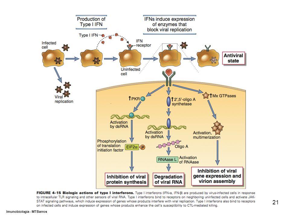DEPARTAMENTO DE CIÊNCIAS DA SAÚDE - UCP Imunobiologia - MTBarros 21