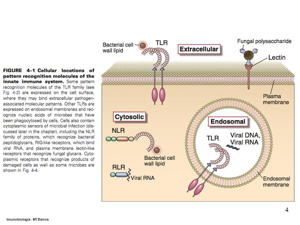 DEPARTAMENTO DE CIÊNCIAS DA SAÚDE - UCP Imunobiologia - MTBarros 4