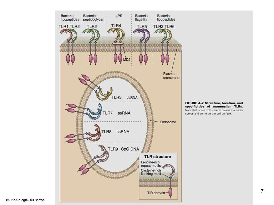 DEPARTAMENTO DE CIÊNCIAS DA SAÚDE - UCP Imunobiologia - MTBarros 7