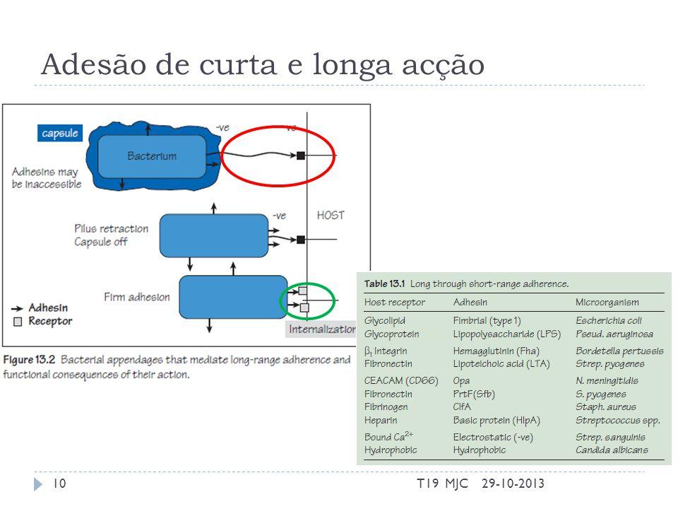 Adesão de curta e longa acção 29-10-2013T19 MJC10