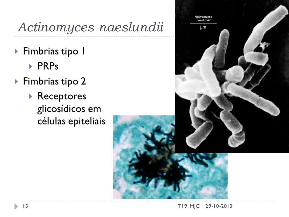 Actinomyces naeslundii 29-10-2013T19 MJC13 Fimbrias tipo 1 PRPs Fimbrias tipo 2 Receptores glicosídicos em células epiteliais
