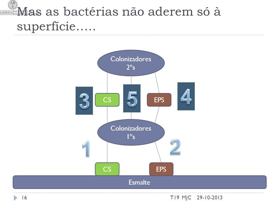Mas as bactérias não aderem só à superfície….. 29-10-2013T19 MJC16 Colonizadores 1ºs Colonizadores 2ºs Esmalte CSEPS CSEPS