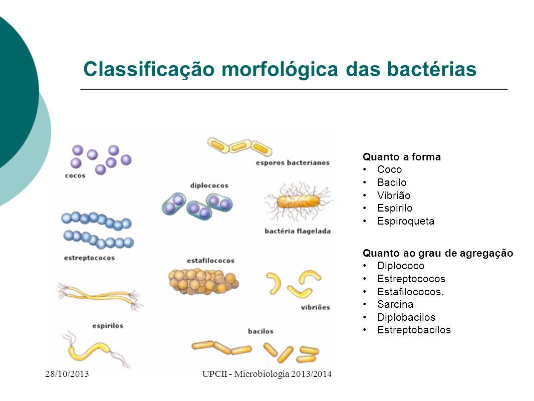 Classificação morfológica das bactérias Quanto a forma Coco Bacilo Vibrião Espirilo Espiroqueta Quanto ao grau de agregação Diplococo Estreptococos Es