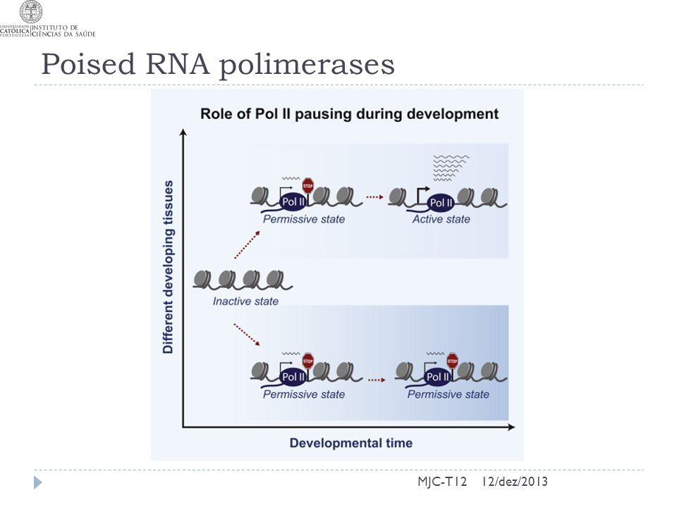 Poised RNA polimerases MJC-T1212/dez/2013