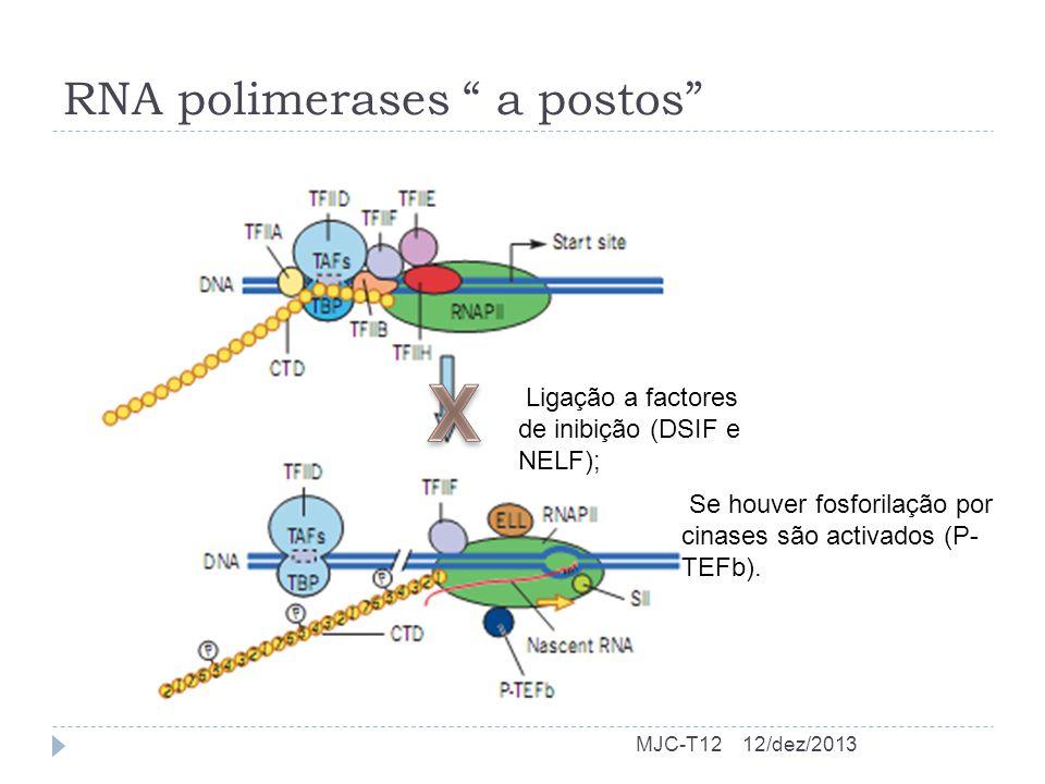 RNA polimerases a postos 12/dez/2013MJC-T12 Ligação a factores de inibição (DSIF e NELF); Se houver fosforilação por cinases são activados (P- TEFb).