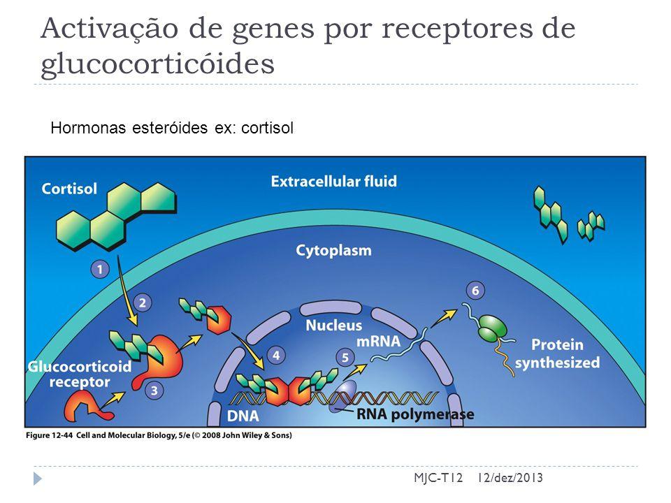 Activação de genes por receptores de glucocorticóides MJC-T12 Hormonas esteróides ex: cortisol 12/dez/2013